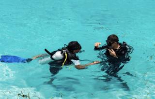 padi diving open dive